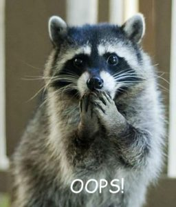 racoon-oh-no